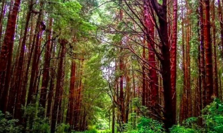 bosque-prusia